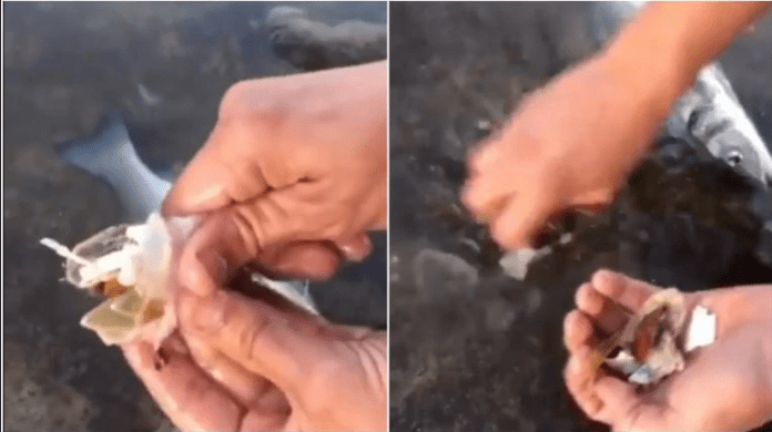In spain, video of a man discovering plastic in the guts of fish in goes viral
