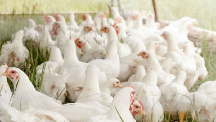 Russia detects world's first case of Bird Flu H5N8