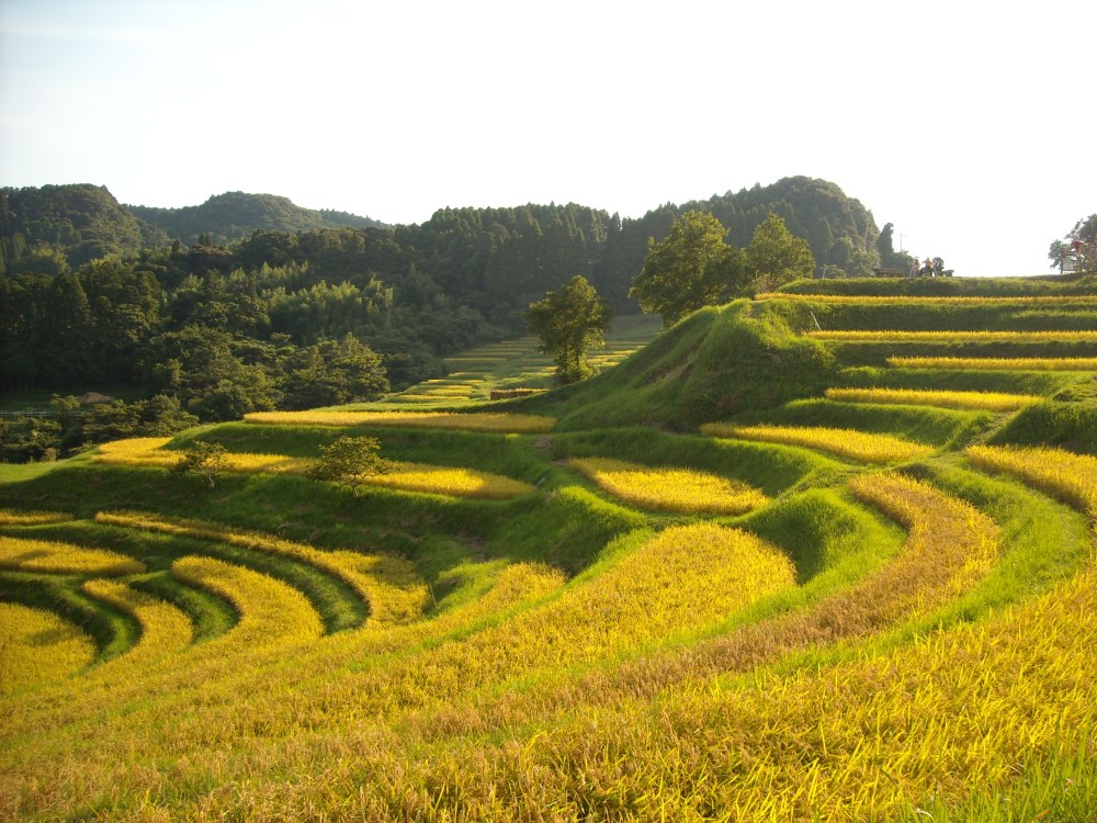 Must-see rice field terrace (5/6)