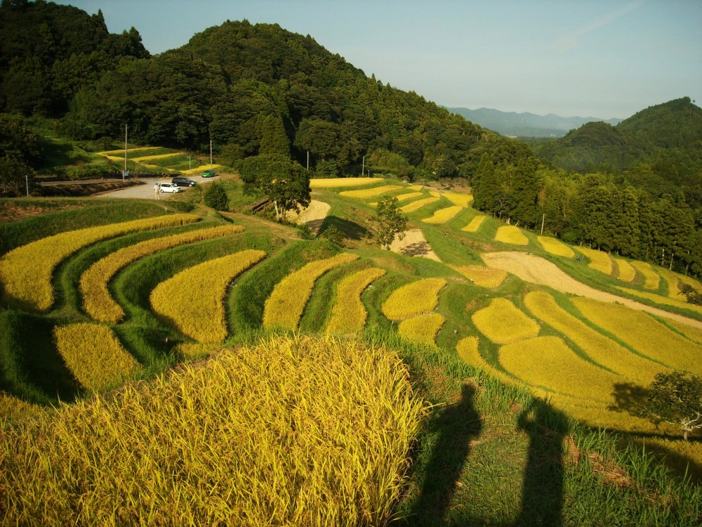 Must-see rice field terrace (4/6)