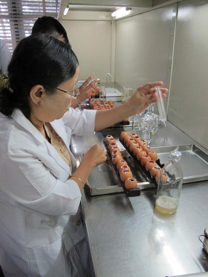 Laboratory staff demonstrating harvesting allantoic fluid to make I-2 Newcastle disease vaccine