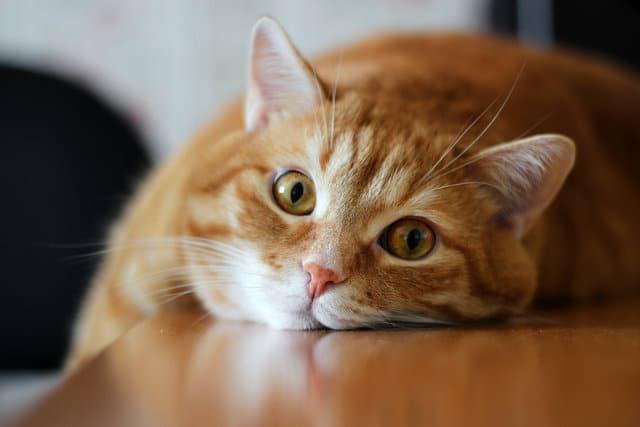 Общая анестезия подготовка риски поведение кошки после наркоза