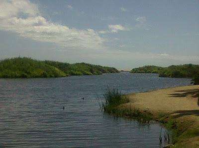 MexMo: The Estuary