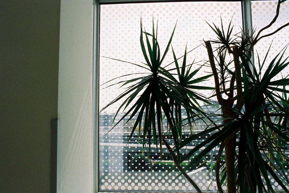 plants in captivity