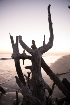 Driftwood Beach, Jekyll Island, March 2016.