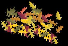 LeafCluster2