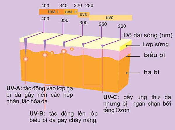 Tác động của tia UV đối với da