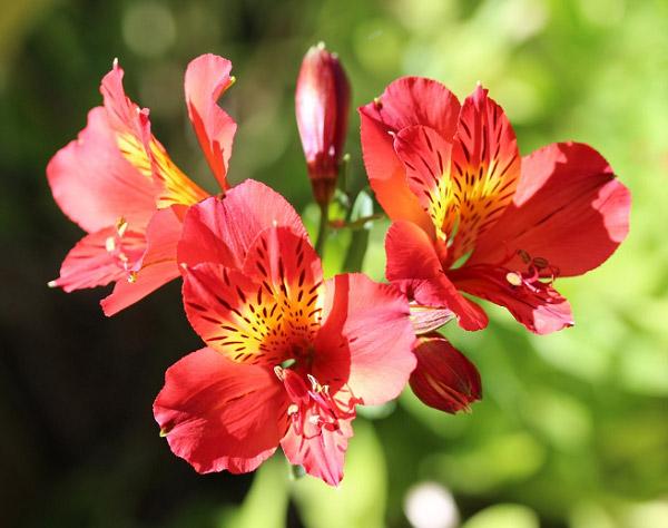 Hình hoa đẹp 7