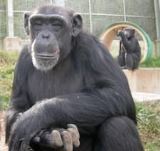 Primate Rescue CenterNicholasville KY