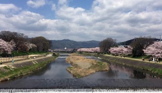 賀茂川沿いの風景(春・桜の季節)