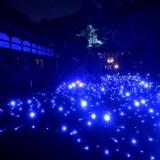 青蓮院の蒼のライトアップ