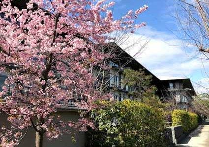 2019年の宿泊客は10.7%増加!! 客室稼働率は82.3%、新型コロナ以降は大幅な減少に!!