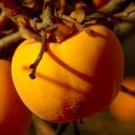 愛と美とお金と 柿から知る