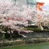カフェ・ド・505(京都国立近代美術館)