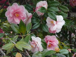 ピンク色の花と絞りが入った花