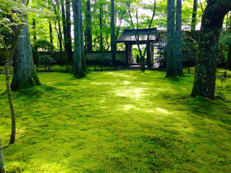 三千院苔庭
