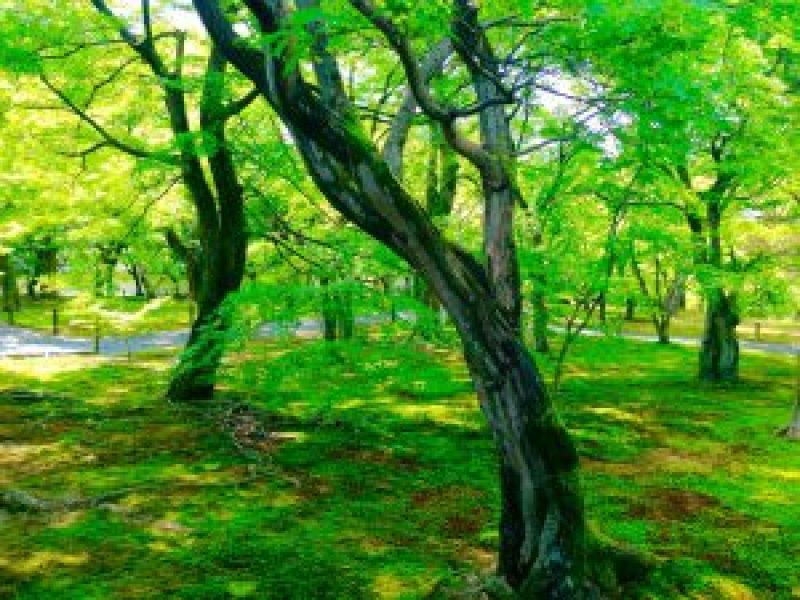 東福寺新緑青葉