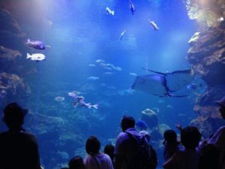 京都水族館16