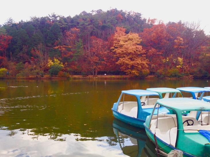 宝ヶ池公園紅葉8