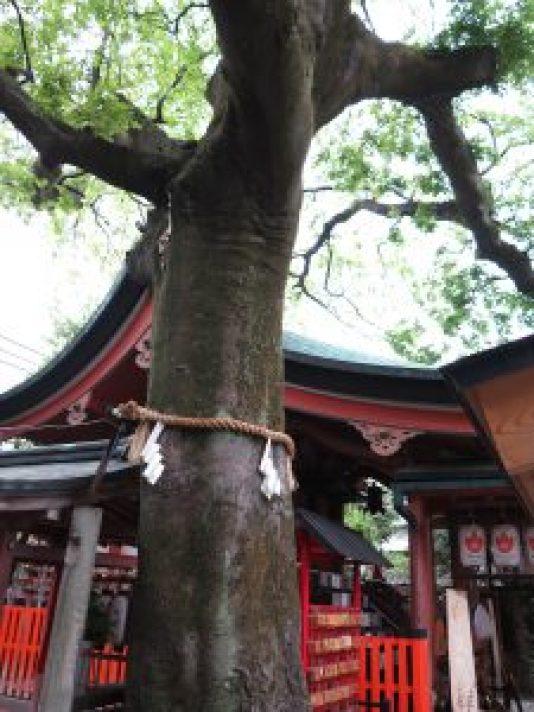 毅信稲荷神社7