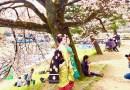 京都のお花見スポット巡り! 鴨川デルタ、高瀬川、穴場スポットなどなど。