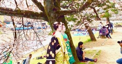 京都桜お花見鴨川デルタ6