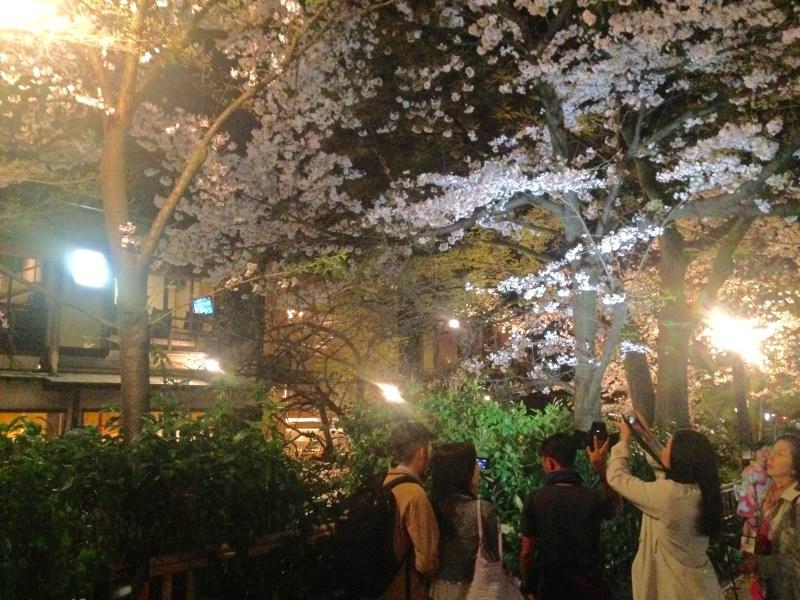 祇園白川高瀬川桜お花見14