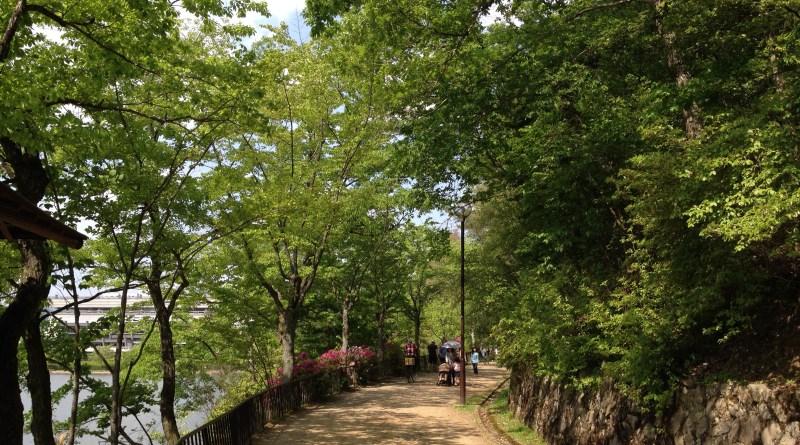 京都岩倉新緑11