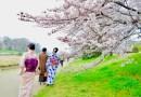 京都の桜、お花見オススメ1位!【鴨川の桜】 歩いても歩いても桜、さくら、サクラ!