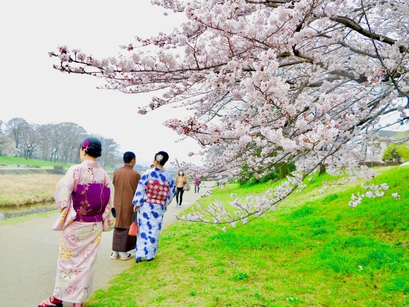 鴨川桜お花見7