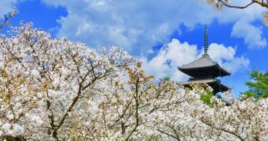 仁和寺御室桜花見111