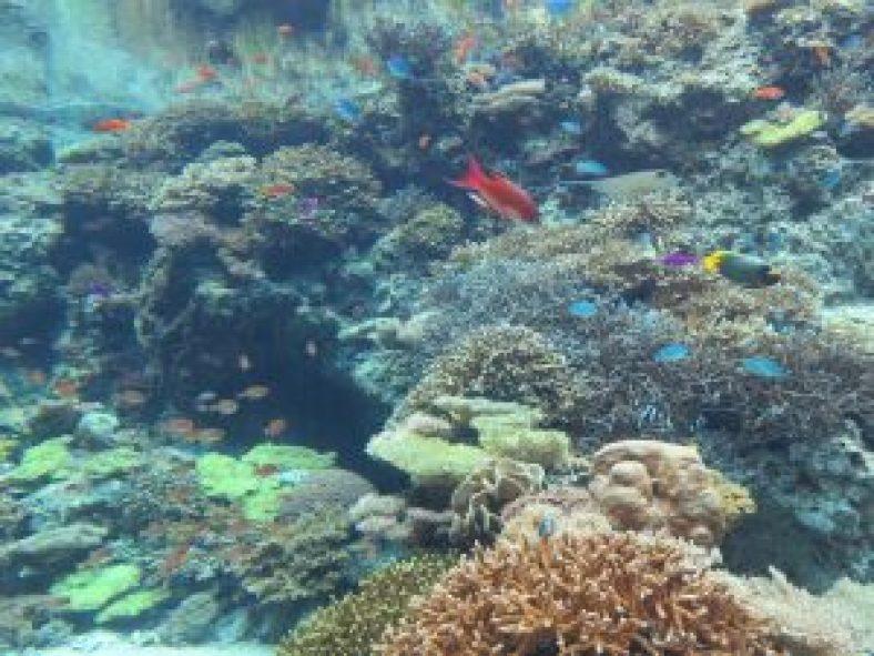 美ら海水族館12