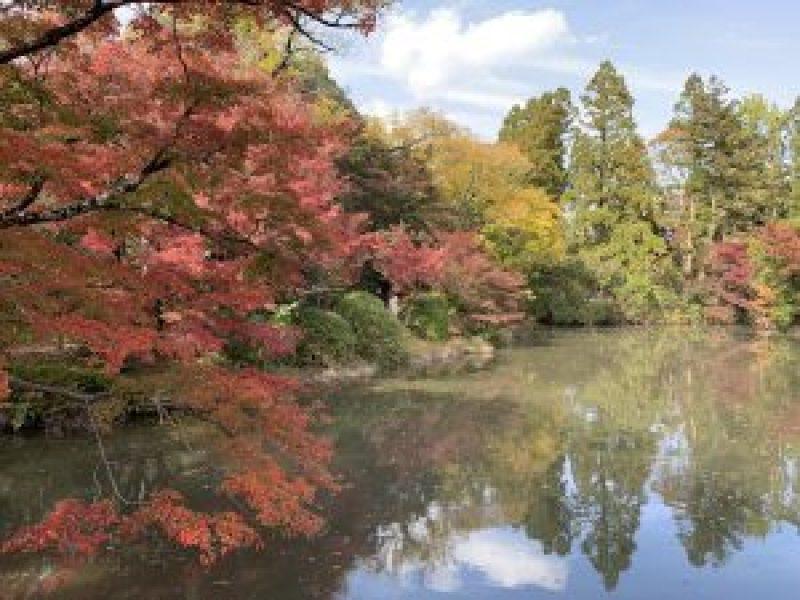 京都植物園13