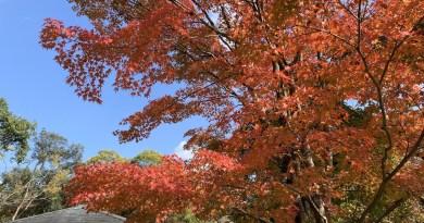 京都植物園11