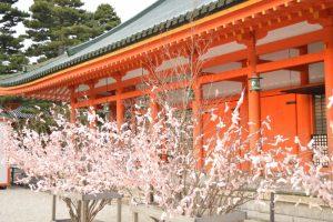 平安神宮の桜みくじ