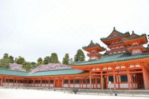 平安神宮のしだれ桜