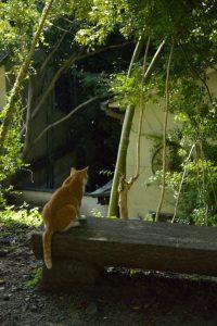 哲学の道のネコ