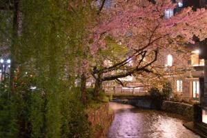 2017年高瀬川の桜