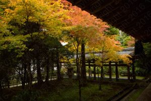 Ryoanji in autumn