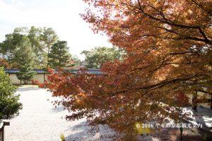 大覚寺の紅葉2017