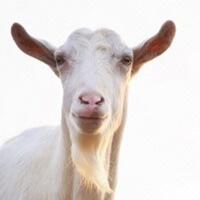 Kyoto Goat