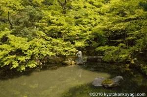 蓮華寺の青紅葉