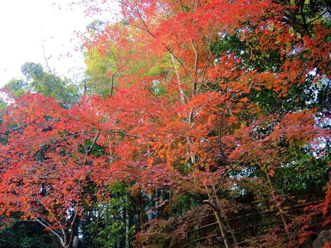 京都・高台寺・紅葉