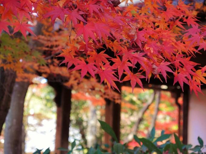 京都・真如堂・紅葉