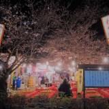 京都・円山公園「花見茶屋」