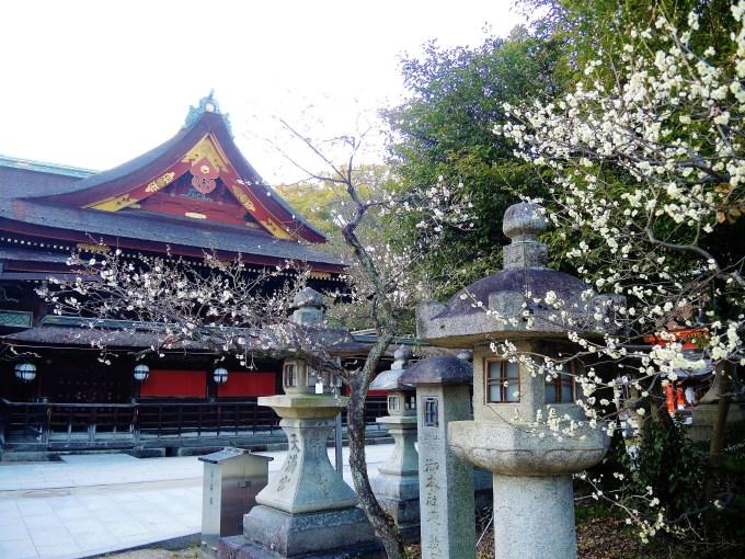 京都・北野天満宮・梅
