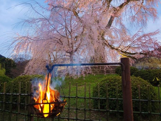京都・円山公園・祇園枝垂桜と篝火