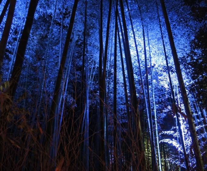 京都・嵐山花灯路・竹林の小径・ライトアップ