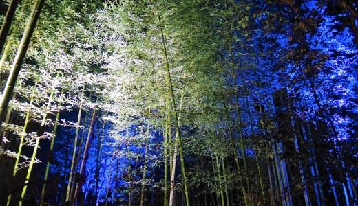 ✨京都「嵐山花灯路」竹林の小径・幻想的なライトアップ