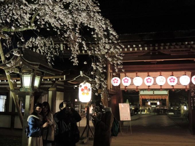 京都「平野神社」桜ライトアップ